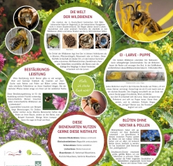HHs! Wildbienen-infoTafel1 web