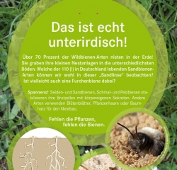 HHs! Wildbienen-infoTafel3 web